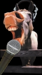 Donkey with mic and headphones